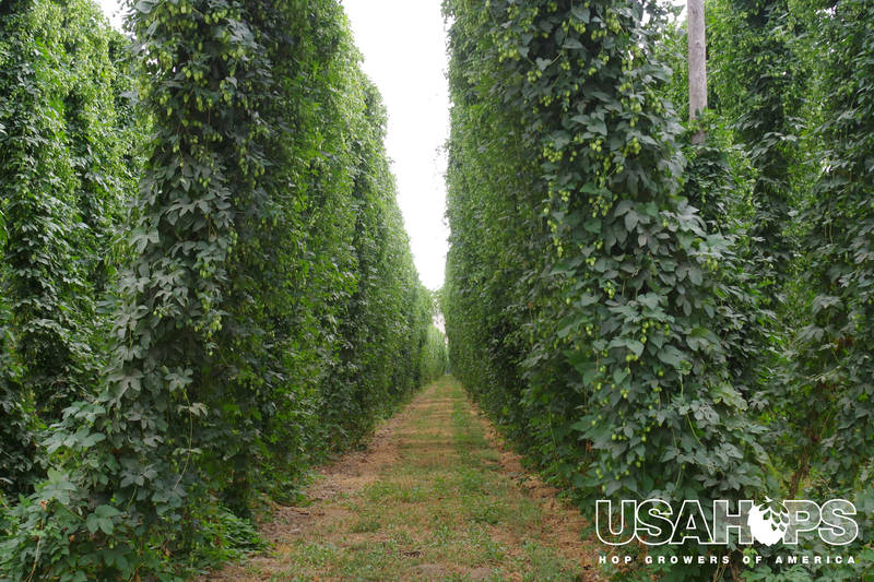NW-Hops-Production-Pt-2