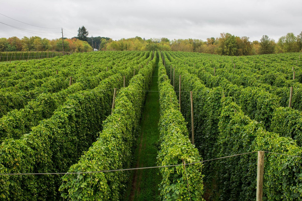 NW-Hops-Production-Pt-1